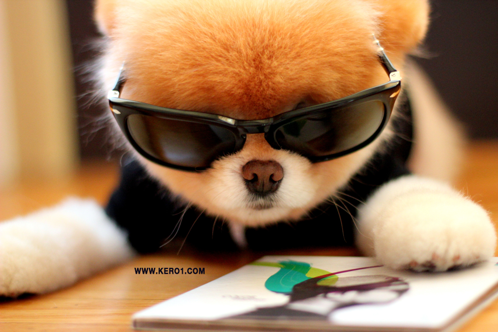 Cats & Dogs World: Boo..the cutest dog in the world!!